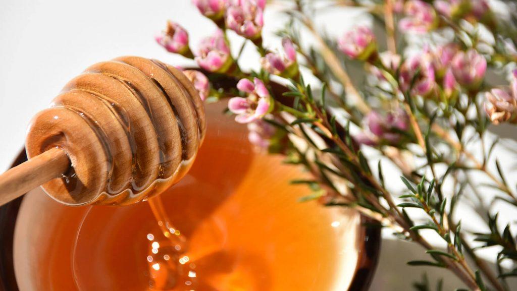 Manukahonig auf Honiggeber mit rosa Manukablüten